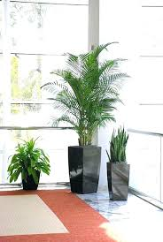 decorative plants for office. Best Plants For Office Decorative Images On Doctor Designs . U