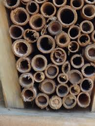 bee house close