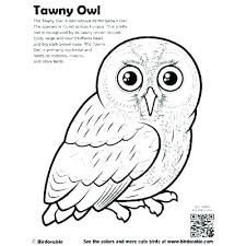Realistic Bird Coloring Pages Birds Page Barn Owl Screech Com Seaahco