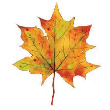 Image result for sycamore leaf