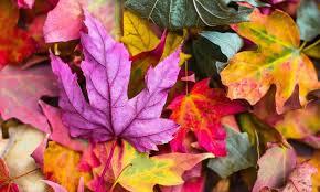 Nejbarevnější rostliny pro podzimní zahradu