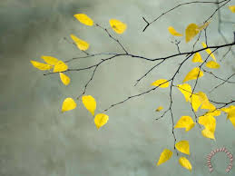 yellow and gray paintings collection autumnal birch tree limbs against collecti
