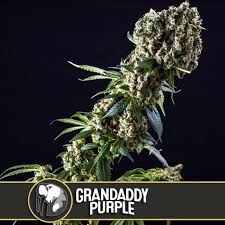 Grandaddy Purple from Blimburn Seeds - Seeds66