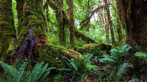 Ideas For 4k Resolution Rainforest ...