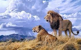 african animals wallpaper high resolution.  Resolution Download Wallpaper On African Animals High Resolution N