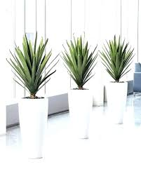 fake plants for office best fake plants artificial office ideas on outdoor to for planter
