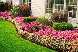 Green grasses ornamented with colorful blossoms of petunias, sword foliage  and other non-flowering