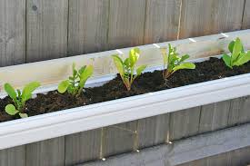 Kitchen Garden Planter Similiar Gutter Vegetable Planters Keywords
