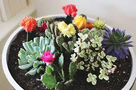 Small Picture Indoor Cactus Garden 17 Best Ideas About Indoor Cactus Garden