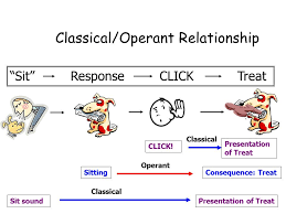 Example Of Classical Conditioning Deconstructing The Click The Science Dog
