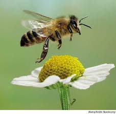 Image result for bee usage in sentence