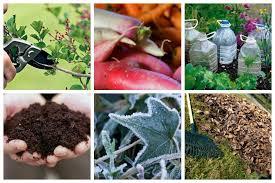 fall gardening tips. fall gardening tips