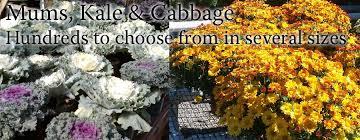 garden store morristown nj. country mile gardens | morristown, nj your one stop garden center call us @ 973-425-0088 store morristown nj m
