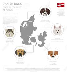 Dog Breed History Chart Dogs By Country Of Origin Danish Dog Breeds Infographic Template