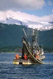 <b>Wild Alaskan Salmon Oil</b> - Life Line Pet Nutrition, Inc.