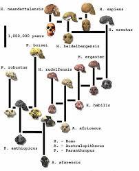 Human Evolution Chart Species Unit 5