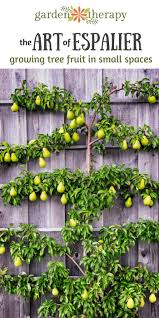 Fan Trained U0026 Espalier Fruit Trees  Cordon Fruit Trees For SaleGrowing Cordon Fruit Trees