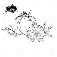 フリーハンド描画のフルーツベクトルの図果物ベクトル彫刻スタイルで果物手には果物のイラストが