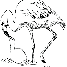 pictures of flamingos to color. Fine Color Flamingo Coloring Pages Medium Size Of Flamingos Cartoon Images Timely  Pictures To Color On Pictures Of Flamingos To Color M