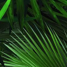 Kek Amsterdam Palm Behang Flinders Verzendt Gratis