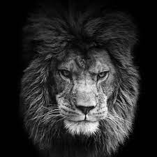 Dark Black Lion Wallpaper