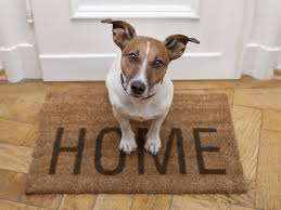 House Sitting Trustedhousesitters Com Supports National Pet Month Uk