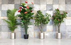The Benefits Of Office Plants  T