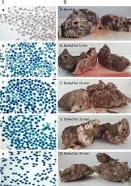Canine Parasite Egg Identification Chart Echinococcus Granulosus Wikipedia