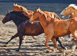 horse painting wild horses running by clarence alford
