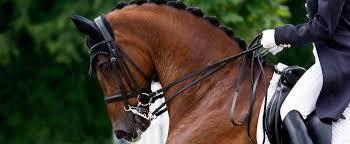 professional horse face photography. Modren Photography Professional Horse Photography            On Face