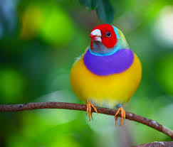 cool colorful nature photography.  Nature Inside Cool Colorful Nature Photography O