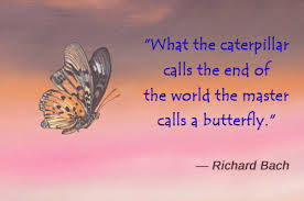 Butterfly Quotes Amazing Awesomely Inspiring Butterfly Quotes For A Great Day Ahead