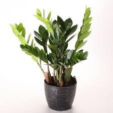 gorgeous home design indoor plants low light common houseplants and best common indoor plants