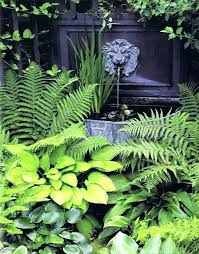 Image result for fern garden ideas