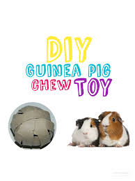 how to make diy toilet paper roll guinea pig toy