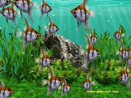 moving fish wallpaper for phones. Delighful Moving I Phones And Other Mobile Devices Using As Backgrounds Screen Savers  Wallpapers Also Find Here Top Quality Wallpapers For Free To Download Inside Moving Fish Wallpaper For