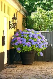 what to plant in big pots if you want give a surprise factor your home pick back to three front porch flower pots ideas big lots plastic