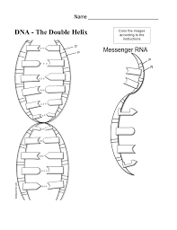 DNA 360   CSTA 2011 as well Worksheets for all   Download and Share Worksheets   Free on further Structure of Dna Worksheet Middle School images further Coloring worksheet that explains transcription and translation besides What is a Chromosome    Worksheet   Education besides Fox News Sinks to a New Low  The War on Algebra   Mike the Mad likewise  as well  as well Extract DNA – Cognitive Science Activity PDF for Grade 7 together with Module 3  Strawberry DNA Extraction   PDF also DNA Secret Code by Haney Science   Teachers Pay Teachers. on middle school dna worksheet