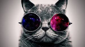 Cat with Glasses Wallpapers - Top Free ...