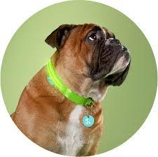 green gremlin poochlight light up flashing dog collar squeaker green gremlin poochlight light up flashing dog collar