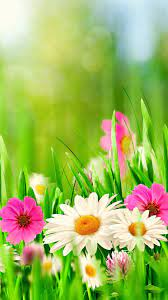 Spring Wallpaper For Iphone