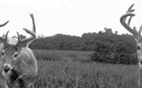 Deer Movement Chart South Carolina 56 Credible Deer Feeding Chart South Carolina