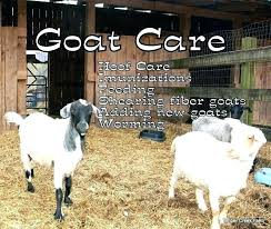 Goat Lice How To Treat Goat Lice Baliwellness Co