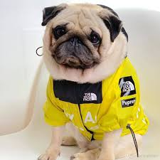 Designer Dog Clothes And Accessories 2019 Tide Designer Pet Coats Huskie Big Dog Clothes High Quality Magic Rain Proof Dog Jackets Teddy Bulldog Schnauzer Clothes S 5xl From Pinkfriday
