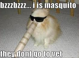 Nice Try, Fluffy...But You're Still Getting Neutered - Laugh Roulette via Relatably.com