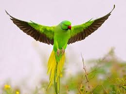 essay on parrot short essay on parrot n parrot essay on parrot we humans always search out for similarities like the matching dress and shoes compatible mentality even if we call it opposites
