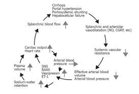 Pathophysiology Of Liver Cirrhosis In Flow Chart Cardiopulmonary Complications In Chronic Liver Disease