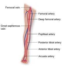 Venous Vs Arterial Insufficiency Chart Chronic Venous Disease Beyond Blood Thinners Stockings