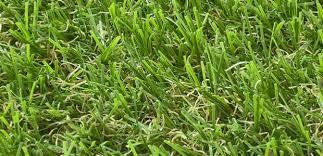 Artificial grass vs turf Tree Artificial Grass