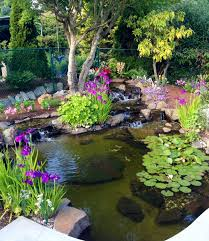 beautiful backyard garden and ponds